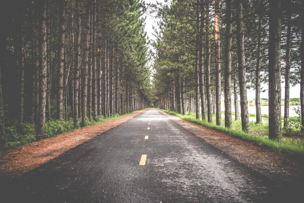 an open road lined with trees and the sunshine peeking through